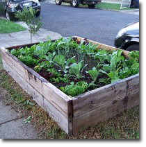 raised_bed_on_nature_strip